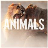 Download Maroon 5 'Animals' Printable PDF 3-page score for Rock / arranged Guitar Chords/Lyrics SKU: 163176.