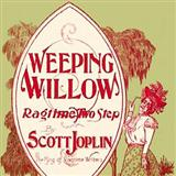 Download or print Scott Joplin Weeping Willow Rag Sheet Music Printable PDF 4-page score for Jazz / arranged Piano Solo SKU: 31809.